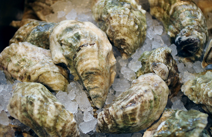 FOOD_oysters_CK2