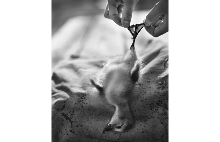 """""""Baby Duck"""" by Cheryle St. Onge is on display at Camera Commons in Dover."""