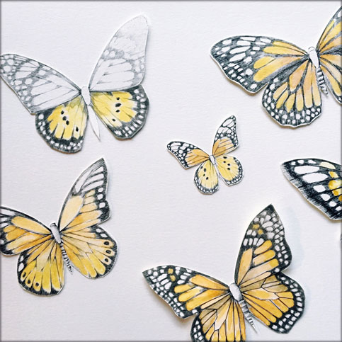 Kenley Darling butterflies