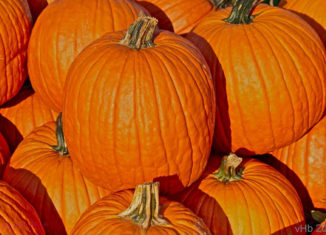 Pumpkins have been turning orange earlier than usual this year.